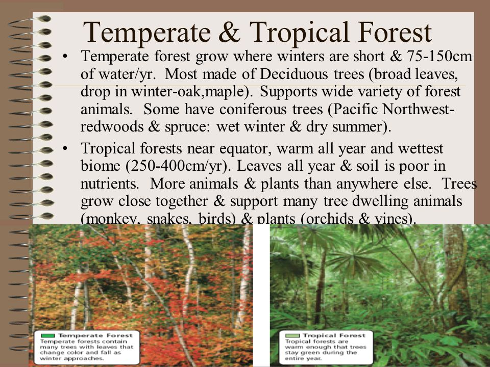 Temperate & Tropical Forest Temperate forest grow where winters are short & 75-150cm of water/yr.