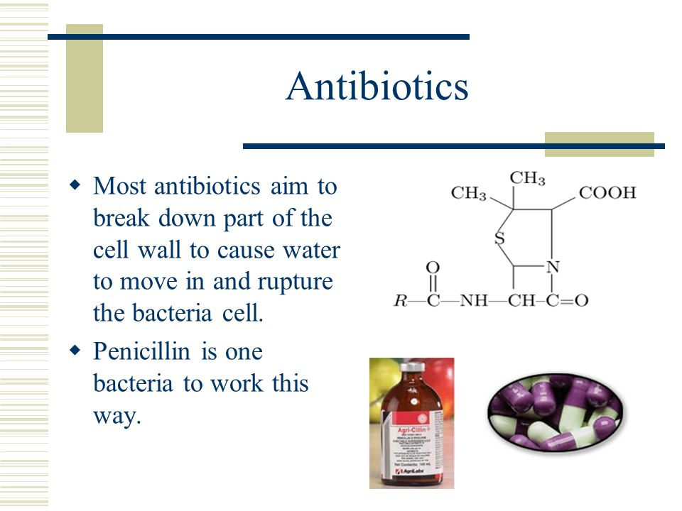 Antibiotics  Most antibiotics aim to break down part of the cell wall to cause water to move in and rupture the bacteria cell.  Penicillin is one ba