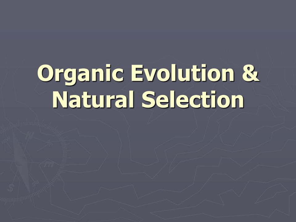 Coevolution & Symbiogenisis ► A niche may be associated with another organism ► The characteristics that favor interdependence may be subject to continued selection (coevolution) ► Selection that favors an organic niche may result in dependence or interdependence (symbiosis) ► Symbiotic relationships may become permanent due to genetic exchange and/or incorporation (symbiogenesis)