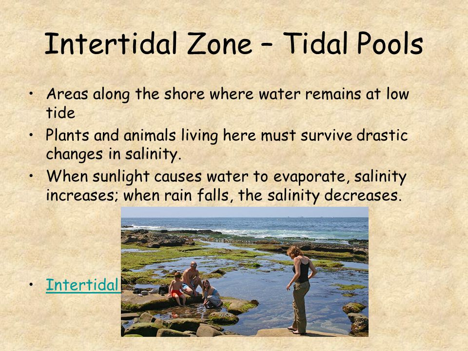 Intertidal Zone – Tidal Pools Areas along the shore where water remains at low tide Plants and animals living here must survive drastic changes in salinity.