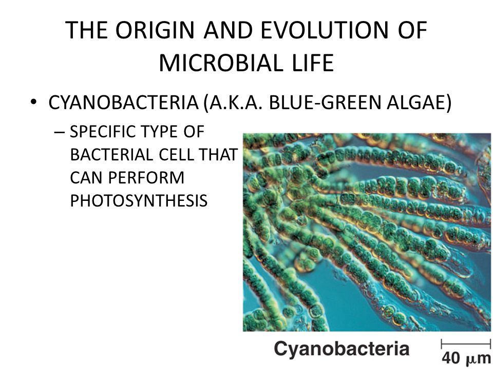 THE ORIGIN AND EVOLUTION OF MICROBIAL LIFE CYANOBACTERIA (A.K.A.