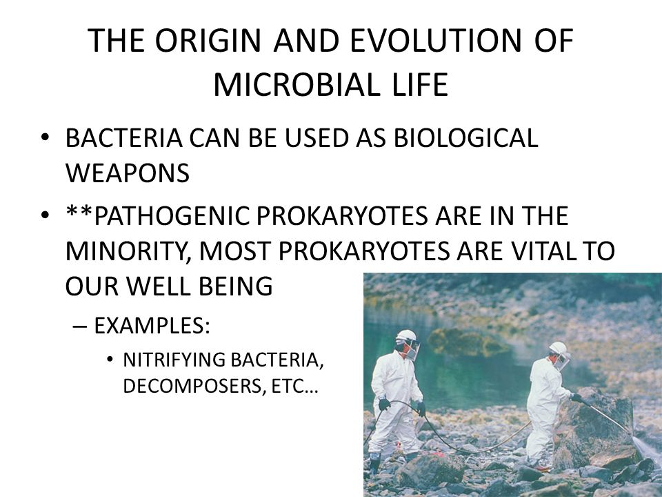 THE ORIGIN AND EVOLUTION OF MICROBIAL LIFE BACTERIA CAN BE USED AS BIOLOGICAL WEAPONS **PATHOGENIC PROKARYOTES ARE IN THE MINORITY, MOST PROKARYOTES ARE VITAL TO OUR WELL BEING – EXAMPLES: NITRIFYING BACTERIA, DECOMPOSERS, ETC…