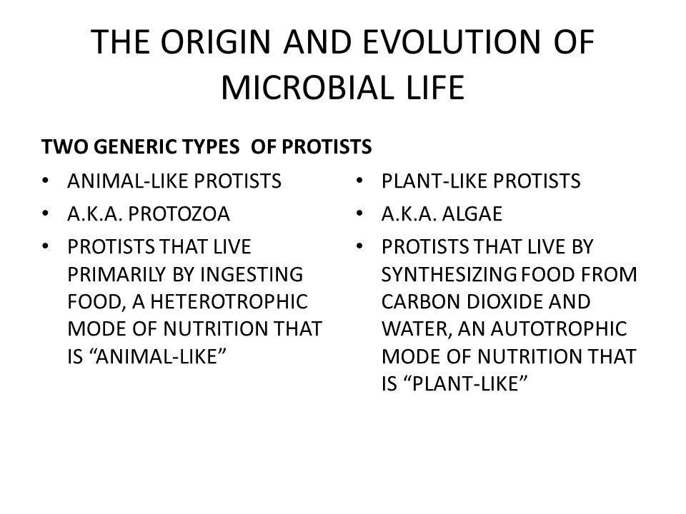 TWO GENERIC TYPES ANIMAL-LIKE PROTISTS A.K.A.