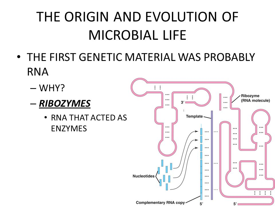 THE ORIGIN AND EVOLUTION OF MICROBIAL LIFE SOME BACTERIA CAUSE DISEASE – PATHOGENS  DISEASE-CAUSING AGENTS – EXOTOXINS  TOXIC PROTEINS SECRETED BY BACTERIAL CELLS – ENDOTOXINS  COMPOUNDS OF THE CELL WALLS OF CERTAIN BACTERIA SANITATION, ANTIBIOTICS, EDUCATION ARE WAYS TO DEFEND AGAINST BACTERIAL DISEASE