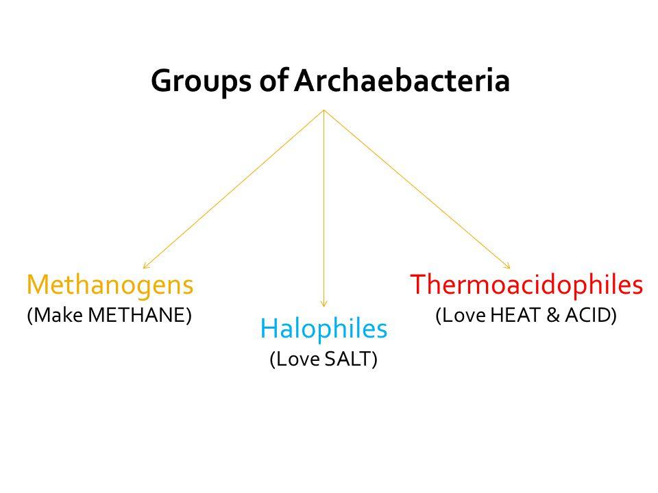 Methanogens (Make METHANE) Thermoacidophiles (Love HEAT & ACID) Halophiles (Love SALT)