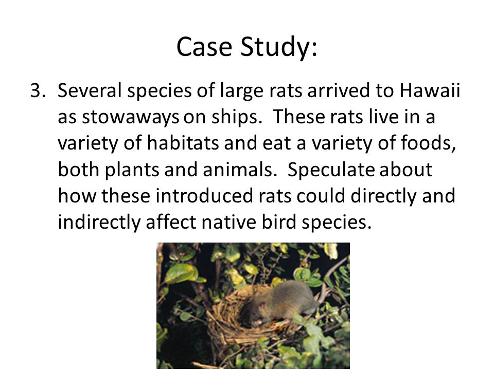 Case Study: 3.Several species of large rats arrived to Hawaii as stowaways on ships.