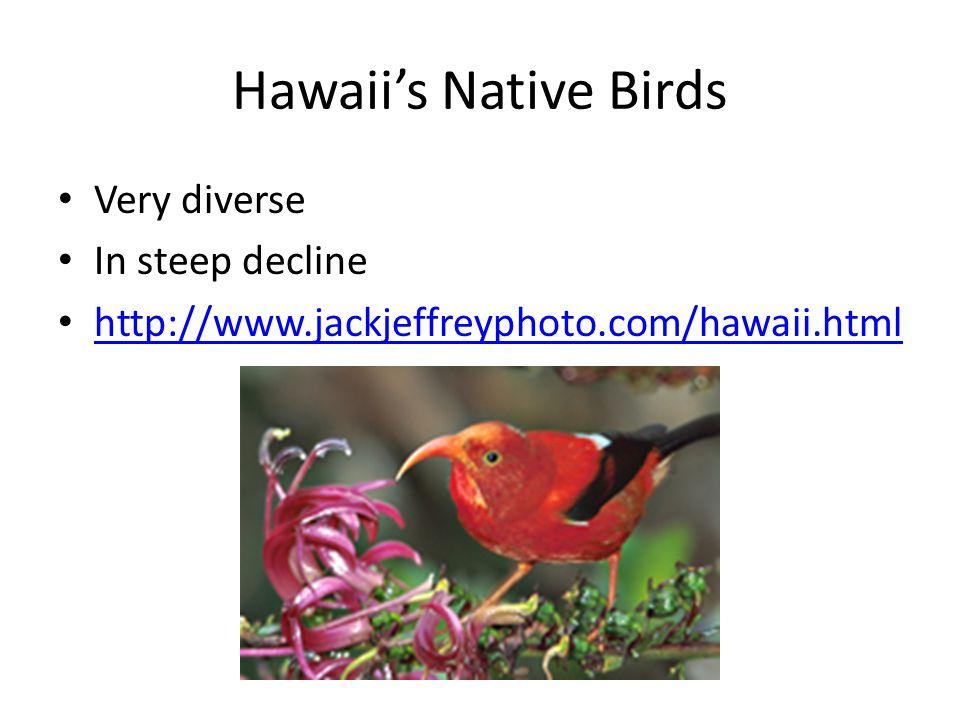 Hawaii's Native Birds Very diverse In steep decline http://www.jackjeffreyphoto.com/hawaii.html