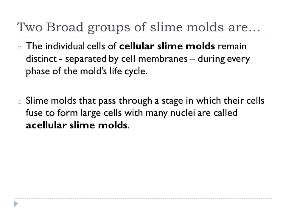 Two Broad groups of slime molds are… o The individual cells of cellular slime molds remain distinct - separated by cell membranes – during every phase of the mold's life cycle.