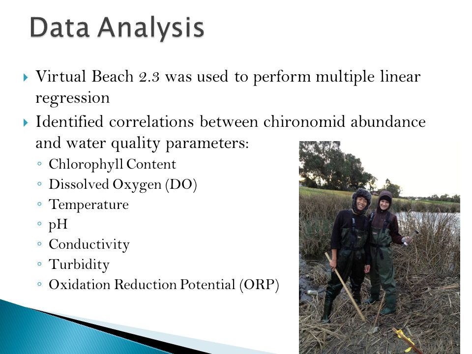  Virtual Beach 2.3 was used to perform multiple linear regression  Identified correlations between chironomid abundance and water quality parameters: ◦ Chlorophyll Content ◦ Dissolved Oxygen (DO) ◦ Temperature ◦ pH ◦ Conductivity ◦ Turbidity ◦ Oxidation Reduction Potential (ORP)