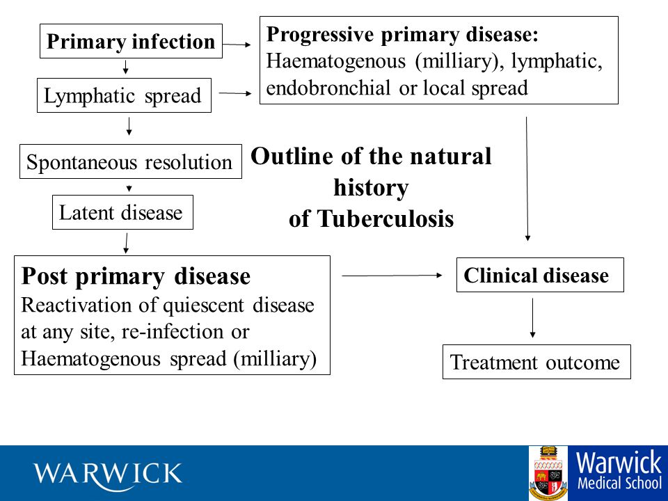 Primary infection Spontaneous resolution Latent disease Clinical disease Post primary disease Reactivation of quiescent disease at any site, re-infect
