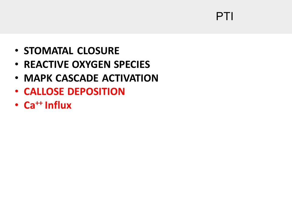 PTI STOMATAL CLOSURE REACTIVE OXYGEN SPECIES MAPK CASCADE ACTIVATION CALLOSE DEPOSITION Ca ++ Influx