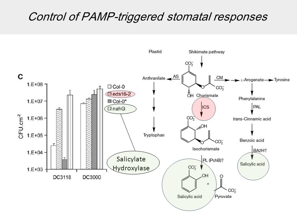 Control of PAMP-triggered stomatal responses Salicylate Hydroxylase