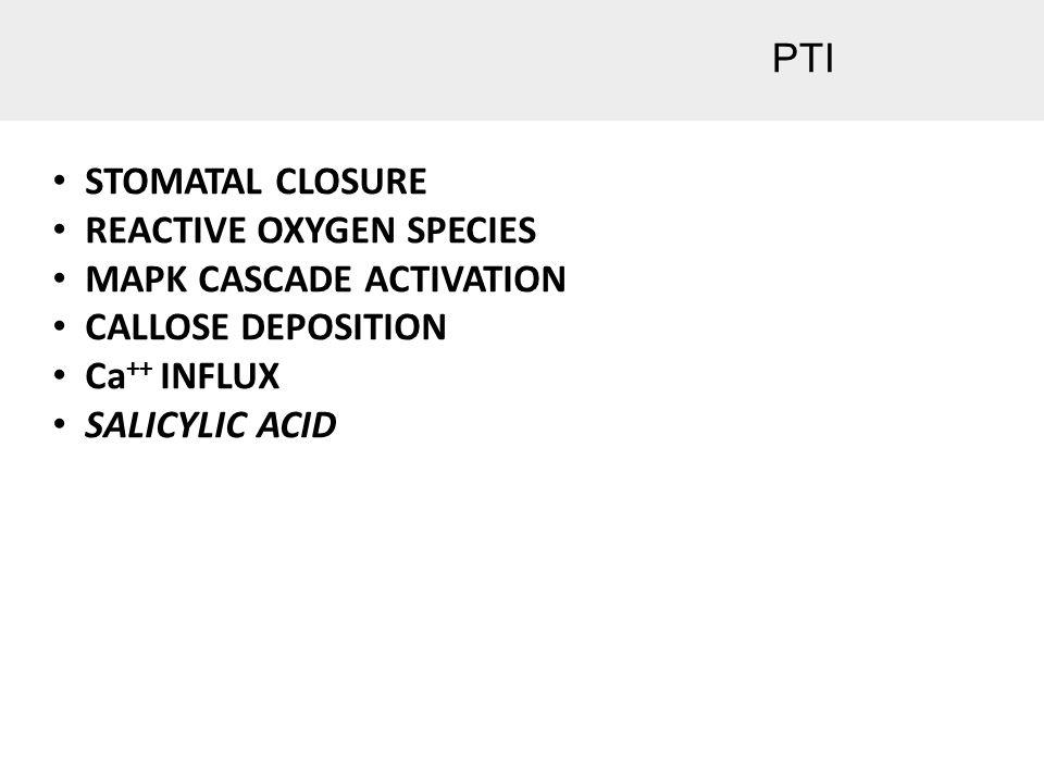 PTI STOMATAL CLOSURE REACTIVE OXYGEN SPECIES MAPK CASCADE ACTIVATION CALLOSE DEPOSITION Ca ++ INFLUX SALICYLIC ACID