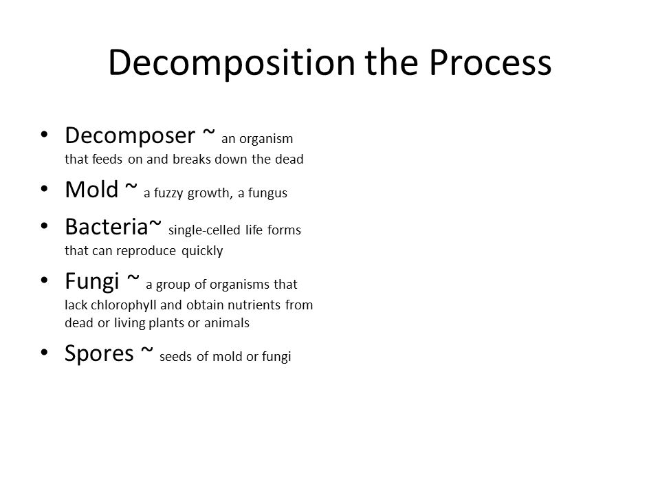 Decomposition the Process Decomposer ~ an organism that feeds on and breaks down the dead Mold ~ a fuzzy growth, a fungus Bacteria~ single-celled life
