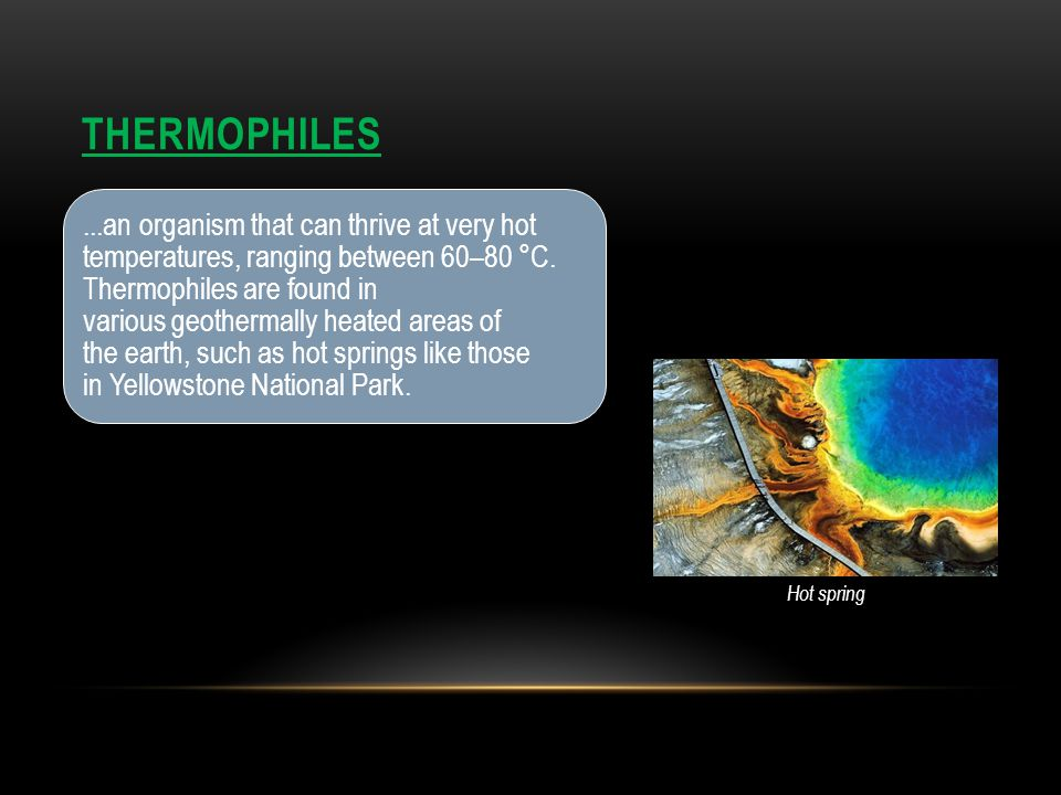 THERMOPHILES...an organism that can thrive at very hot temperatures, ranging between 60– 80 °C. Thermophiles are found in various geothermally heated