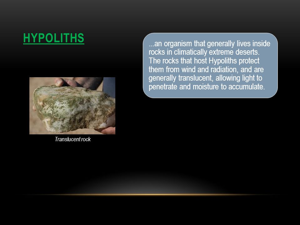 HYPOLITHS...an organism that generally lives inside rocks in climatically extreme deserts.