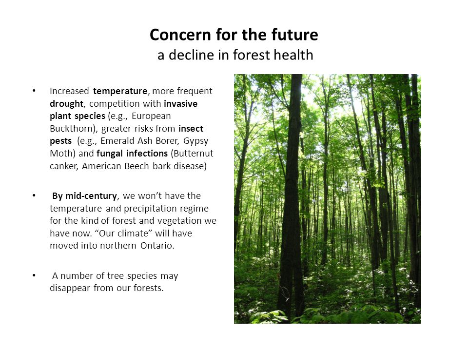 Concern for the future a decline in forest health Increased temperature, more frequent drought, competition with invasive plant species (e.g., European Buckthorn), greater risks from insect pests (e.g., Emerald Ash Borer, Gypsy Moth) and fungal infections (Butternut canker, American Beech bark disease) By mid-century, we won't have the temperature and precipitation regime for the kind of forest and vegetation we have now.