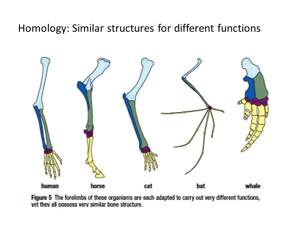 Homology: Similar structures for different functions