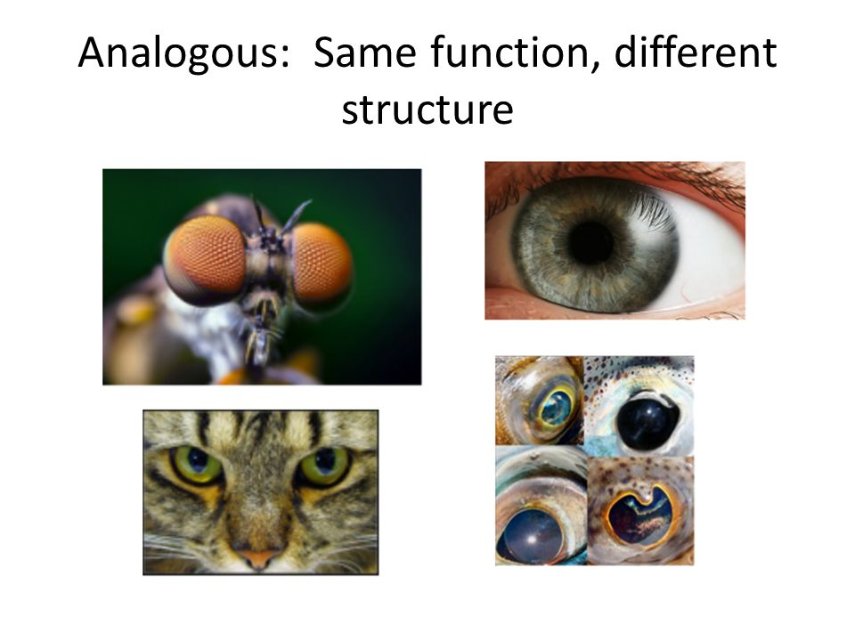 Analogous: Same function, different structure