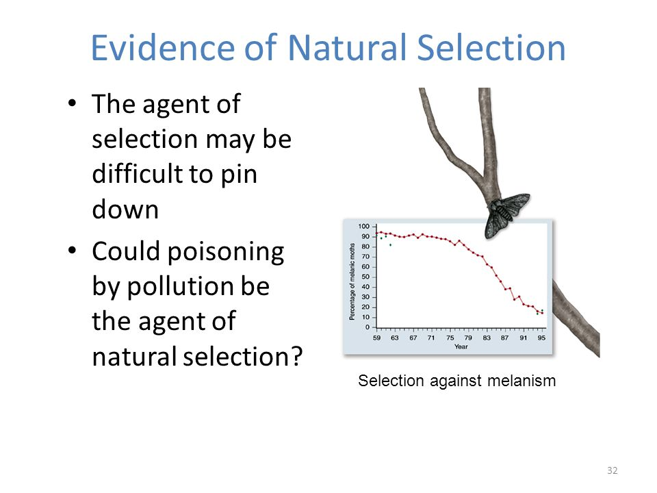 32 The agent of selection may be difficult to pin down Could poisoning by pollution be the agent of natural selection.
