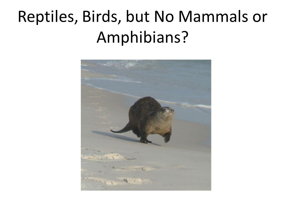 Reptiles, Birds, but No Mammals or Amphibians?