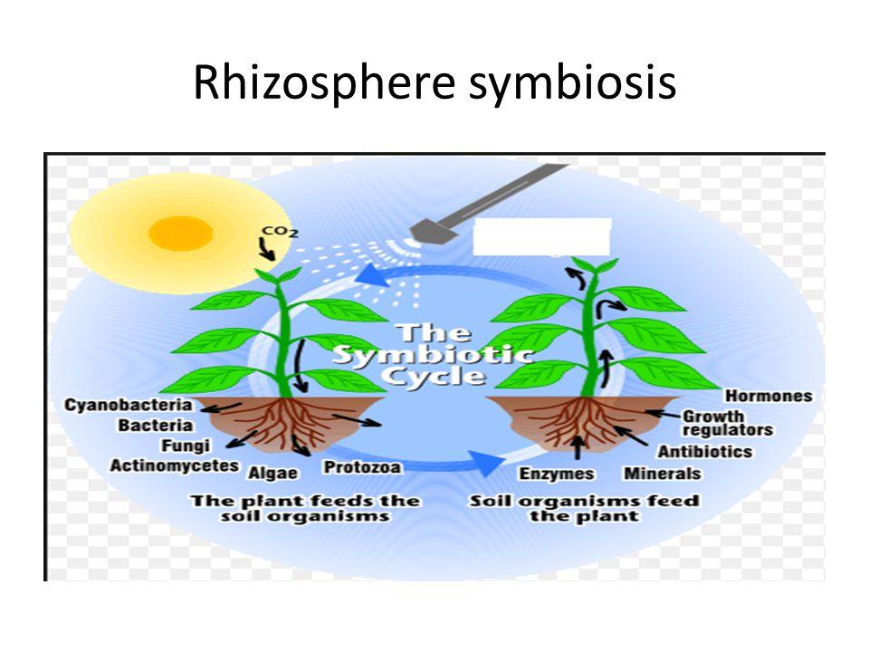Rhizosphere symbiosis