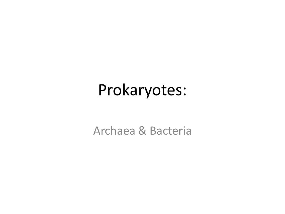 Prokaryotes: Archaea & Bacteria