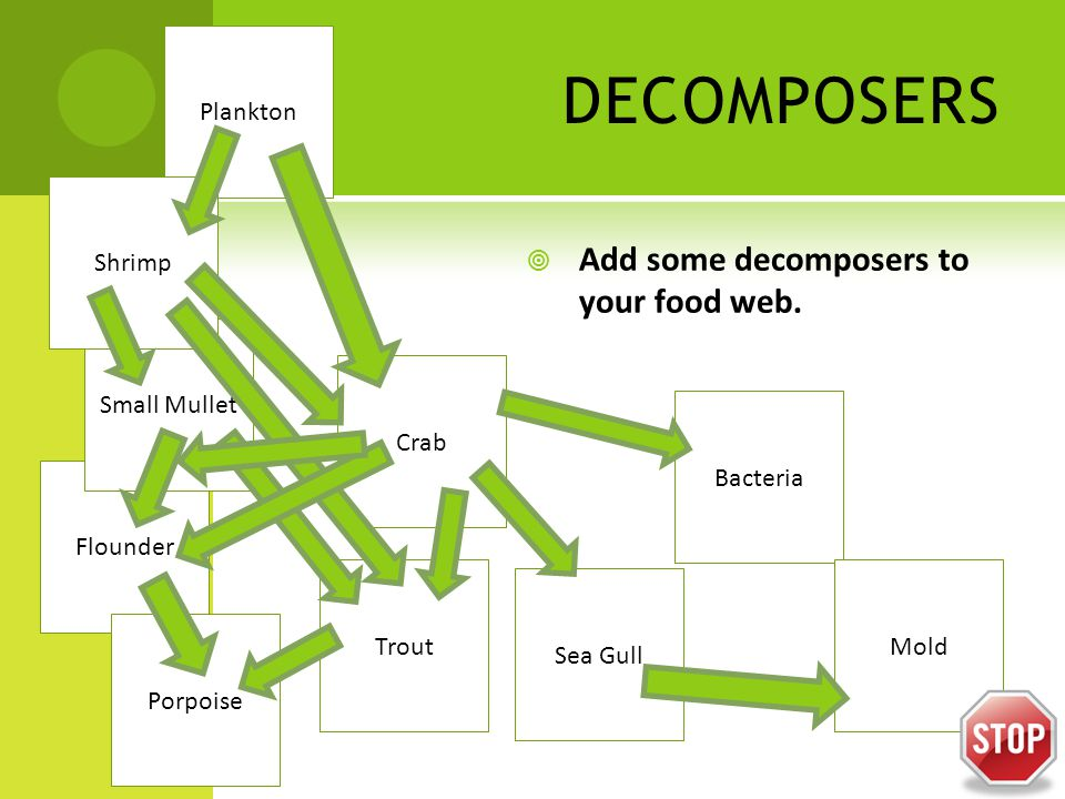 DECOMPOSERS  Add some decomposers to your food web.