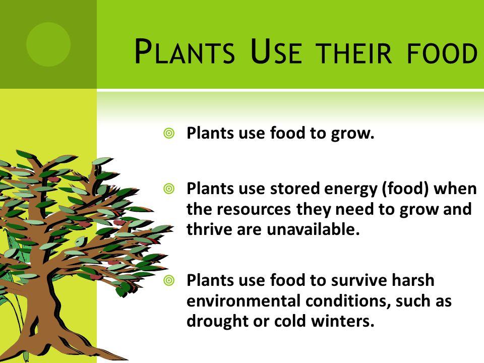 P LANTS U SE THEIR FOOD  Plants use food to grow.