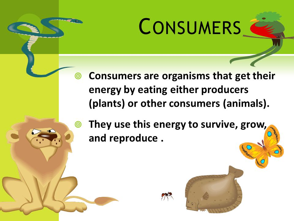 C ONSUMERS  Consumers are organisms that get their energy by eating either producers (plants) or other consumers (animals).
