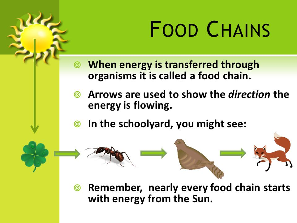 E XAMPLE  Use the strips of paper to create a food chain for organisms that live in one of the Earth's ecosystems.
