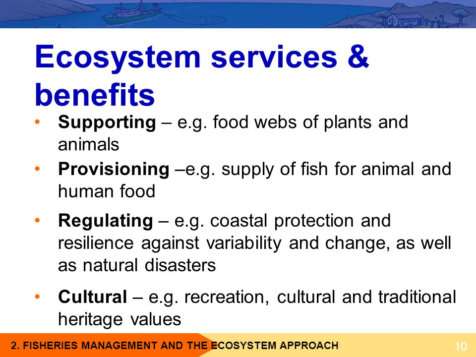 2. FISHERIES MANAGEMENT AND THE ECOSYSTEM APPROACH Ecosystem services & benefits 10 Provisioning –e.g. supply of fish for animal and human food Regula