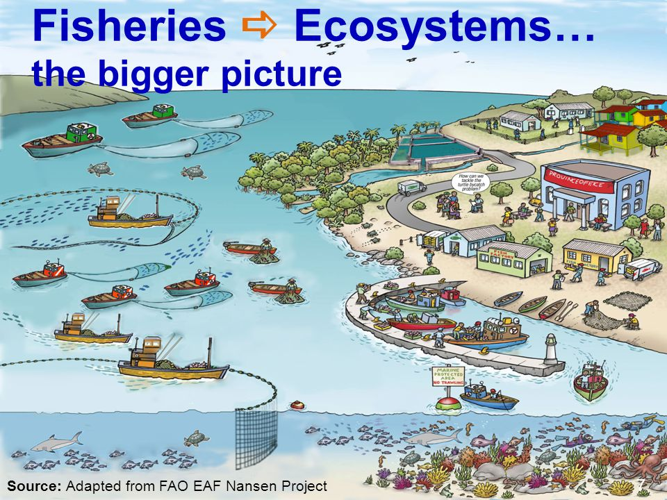 2.FISHERIES MANAGEMENT AND THE ECOSYSTEM APPROACH What is an ecosystem.
