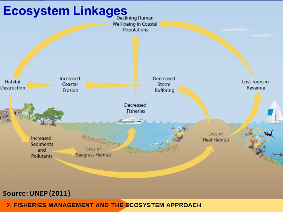 2. FISHERIES MANAGEMENT AND THE ECOSYSTEM APPROACH Ecosystem Linkages Source: UNEP (2011)