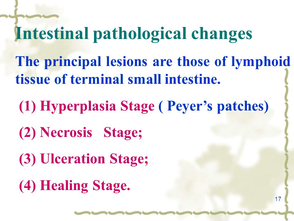 17 Intestinal pathological changes The principal lesions are those of lymphoid tissue of terminal small intestine.