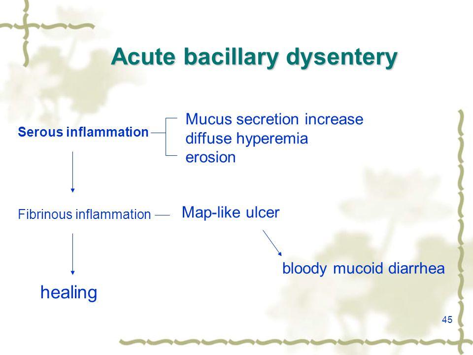 45 Acute bacillary dysentery Fibrinous inflammation Serous inflammation Mucus secretion increase diffuse hyperemia erosion Map-like ulcer healing bloody mucoid diarrhea