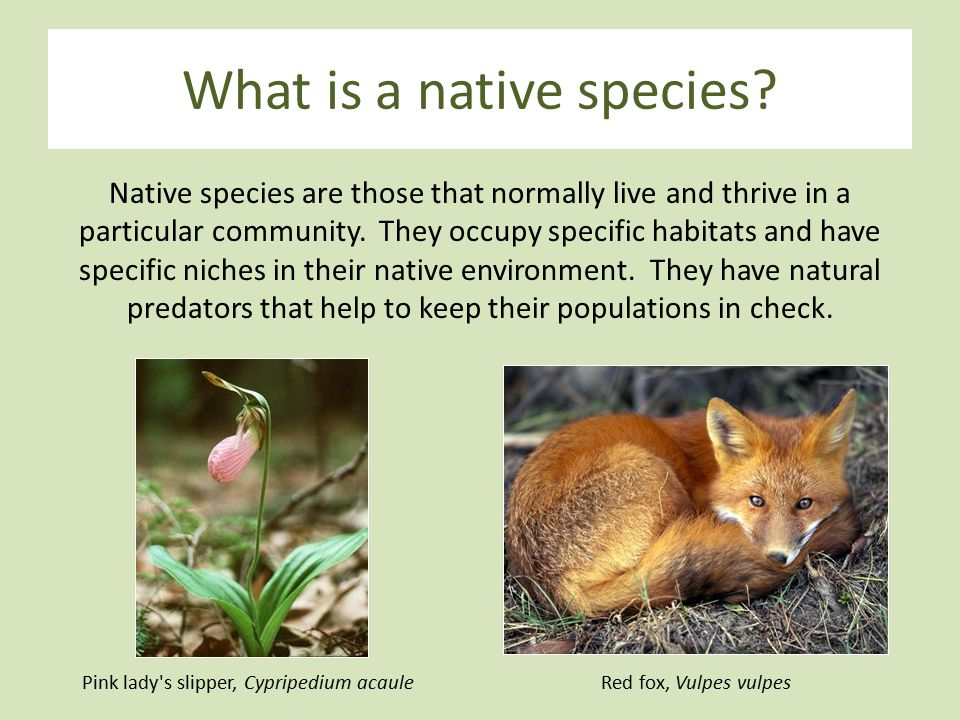 What is a native species.