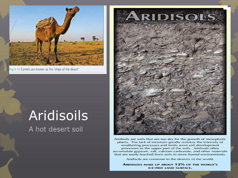 Aridisoils A hot desert soil