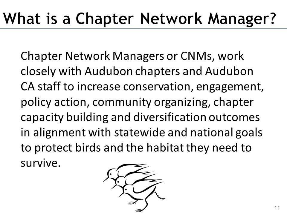 11 Chapter Network Managers or CNMs, work closely with Audubon chapters and Audubon CA staff to increase conservation, engagement, policy action, comm