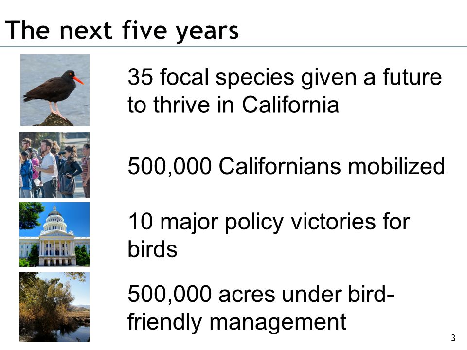 We build and strengthen the Audubon California chapter network.