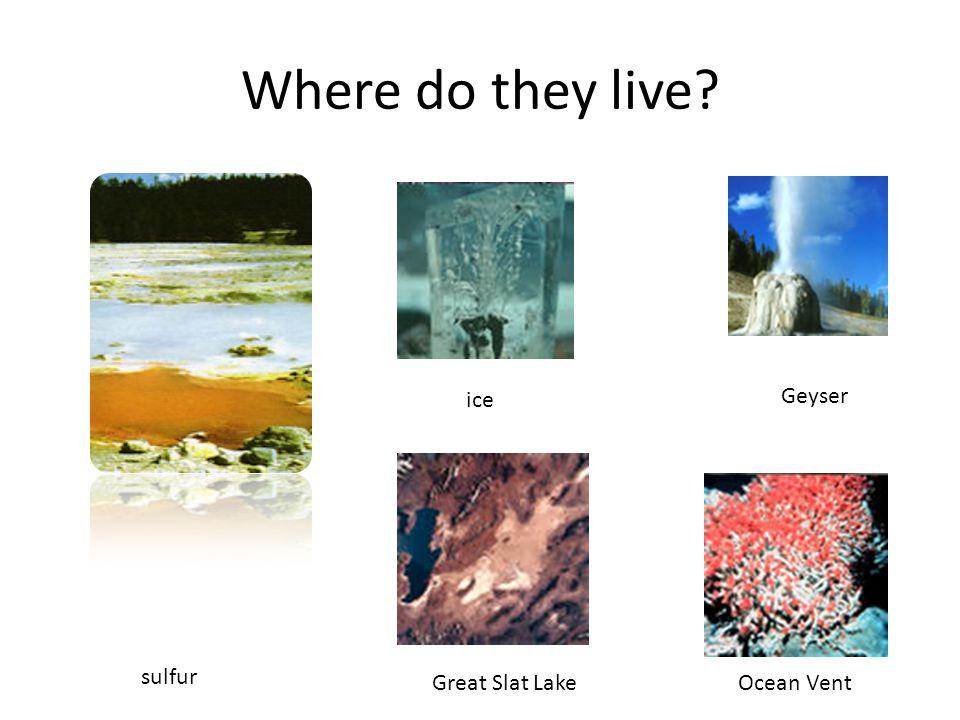 Where do they live Ocean Vent ice sulfur Great Slat Lake Geyser