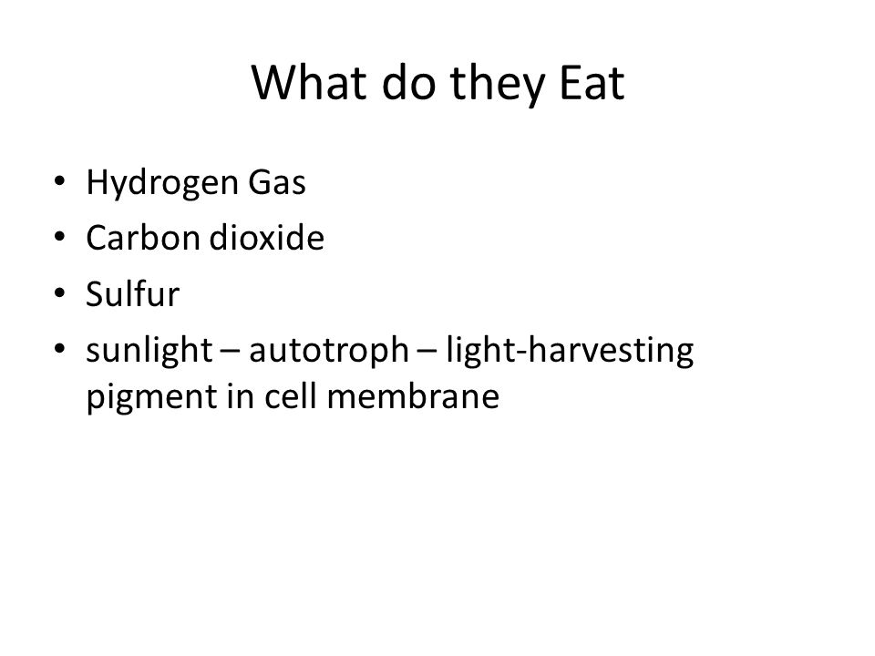 What do they Eat Hydrogen Gas Carbon dioxide Sulfur sunlight – autotroph – light-harvesting pigment in cell membrane