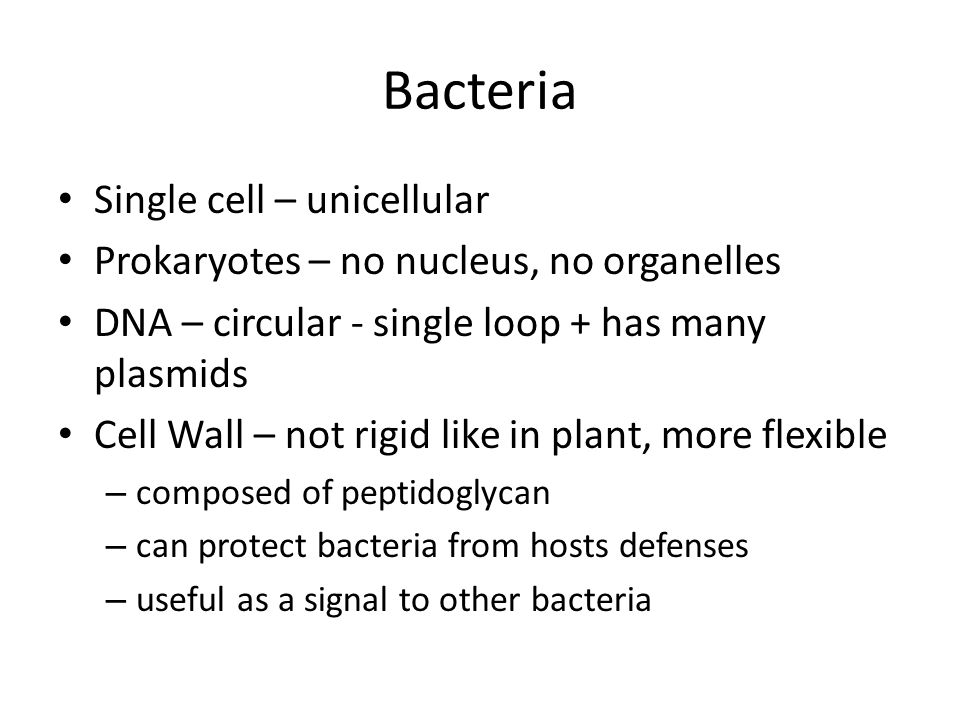 Bacteria Single cell – unicellular Prokaryotes – no nucleus, no organelles DNA – circular - single loop + has many plasmids Cell Wall – not rigid like in plant, more flexible – composed of peptidoglycan – can protect bacteria from hosts defenses – useful as a signal to other bacteria