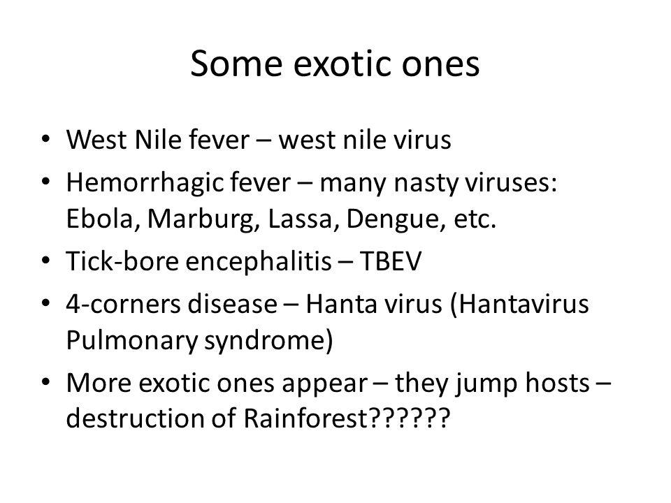 Some exotic ones West Nile fever – west nile virus Hemorrhagic fever – many nasty viruses: Ebola, Marburg, Lassa, Dengue, etc.