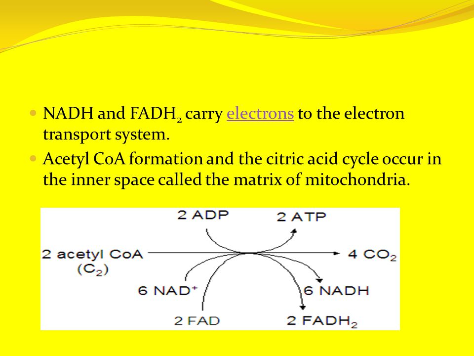 NADH and FADH 2 carry electrons to the electron transport system.electrons Acetyl CoA formation and the citric acid cycle occur in the inner space called the matrix of mitochondria.
