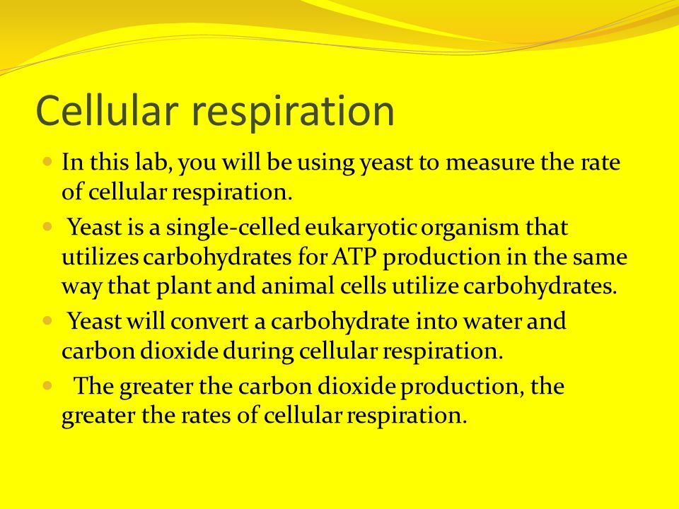 Cellular respiration In this lab, you will be using yeast to measure the rate of cellular respiration.