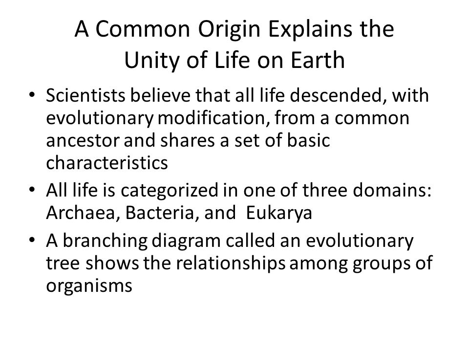 Prokaryotes Changed the World with Oxygen-Producing Photosynthesis Eukaryotic photosynthesis changed the atmospheric composition of Earth by increasing the level of available oxygen The increased oxygen levels in the atmosphere allowed for larger eukaryotic cells that require more energy to thrive