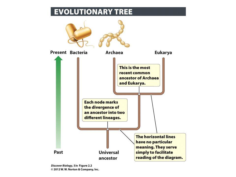 Prokaryotes are Mainly Single-Celled, But Some Show Social Behaviors Prokaryotes contain less DNA material than eukaryotic organisms Although they are single-celled organisms, some prokaryotes exhibit multicellular organization