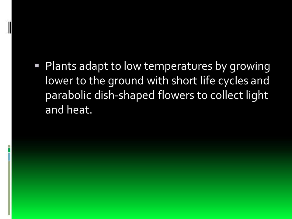  Plants adapt to low temperatures by growing lower to the ground with short life cycles and parabolic dish-shaped flowers to collect light and heat.