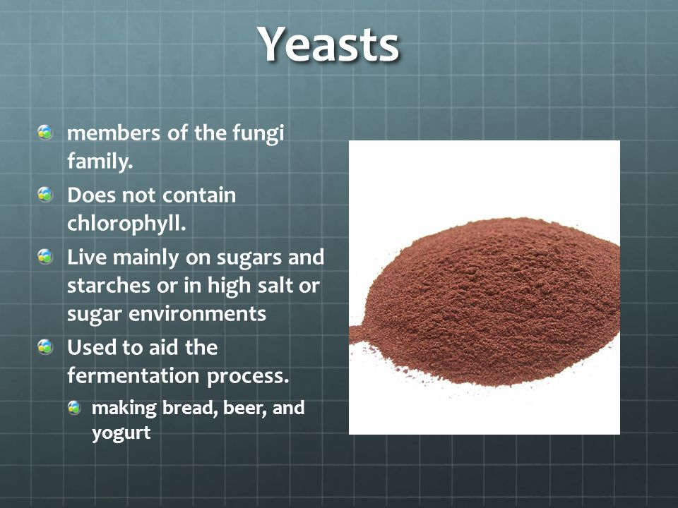 Yeasts members of the fungi family. Does not contain chlorophyll. Live mainly on sugars and starches or in high salt or sugar environments Used to aid